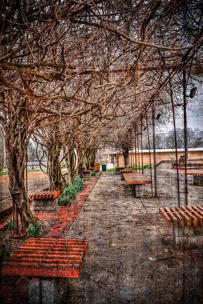 Under the Vines - Okolona