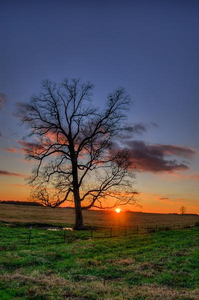 Pecan Tree at Sunset